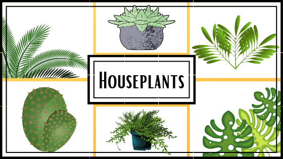 Houseplants (2)