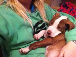 Sleepy Snuggly Puppy